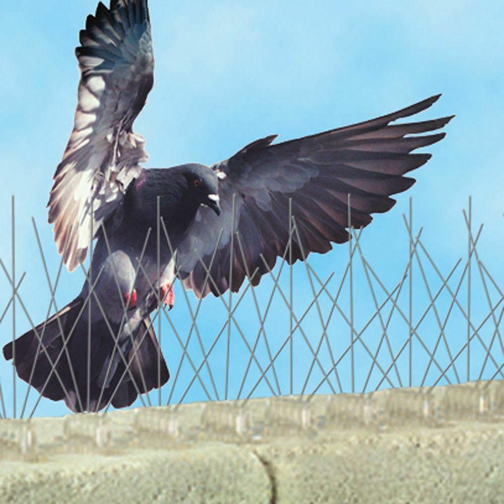 Bird Pest Control Glasgow