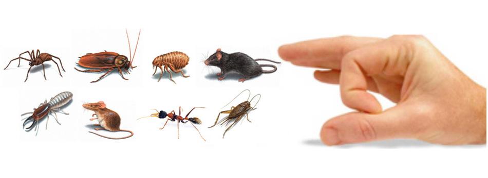 Best Pest Control Glasgow Service